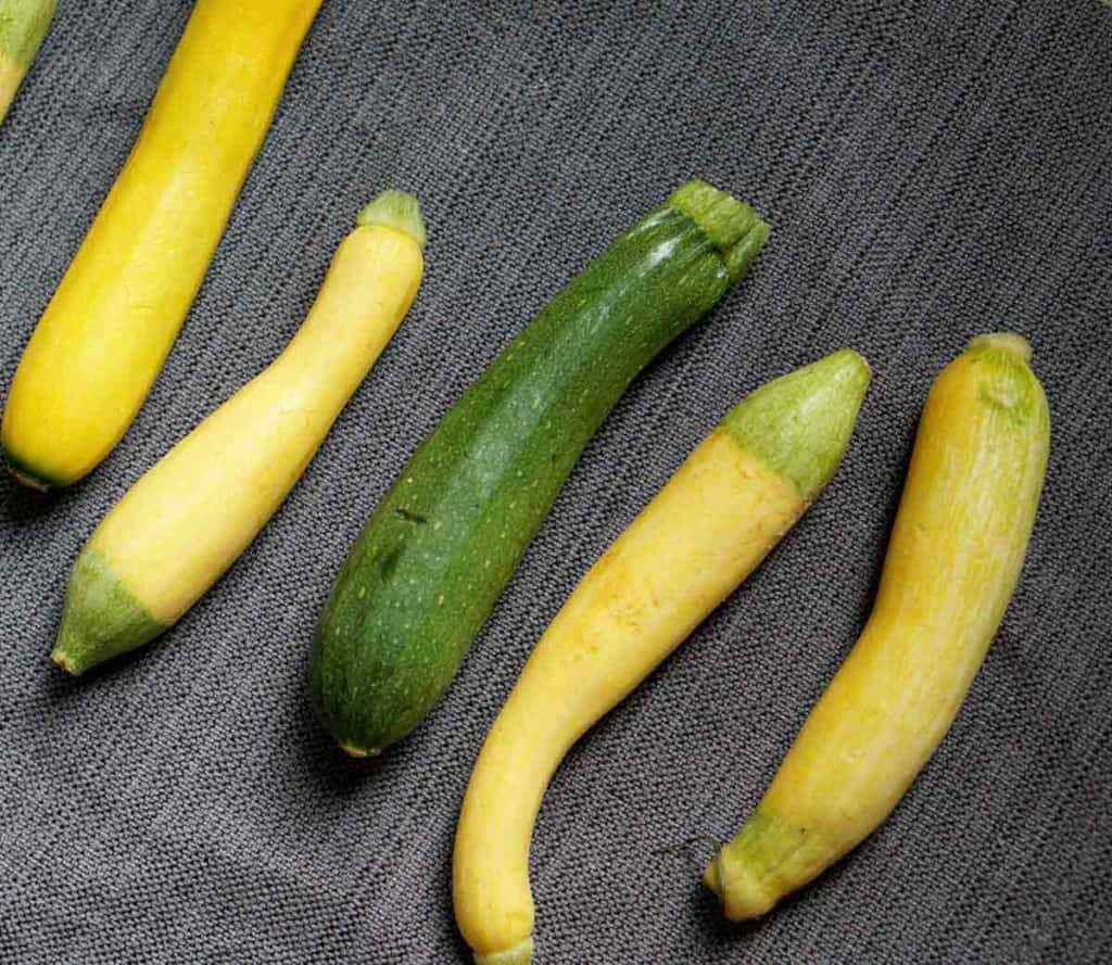 adorable little zucchinis from the CSA Roost Farms are perfect for individual zucchini bread