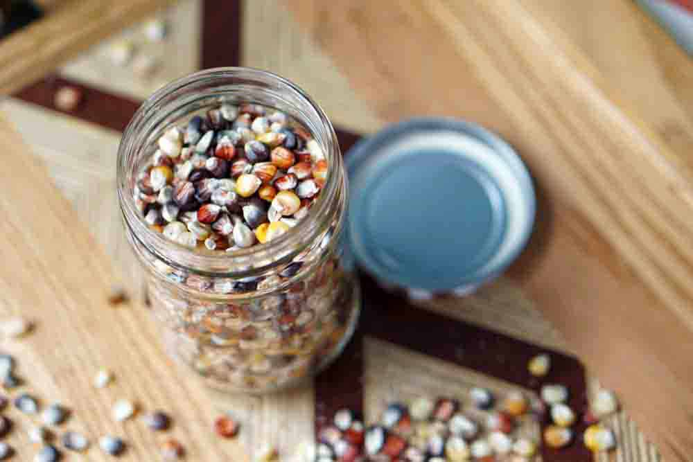 If like me after Thanksgiving you find yourself wondering: Can you eat Indian Corn? And if not, why is it on our table? Then, you're in luck! Read how to harvest and grind that colorful decorative corn into flour, to use it as popcorn, and how it evolved into Modern Sweet Cor