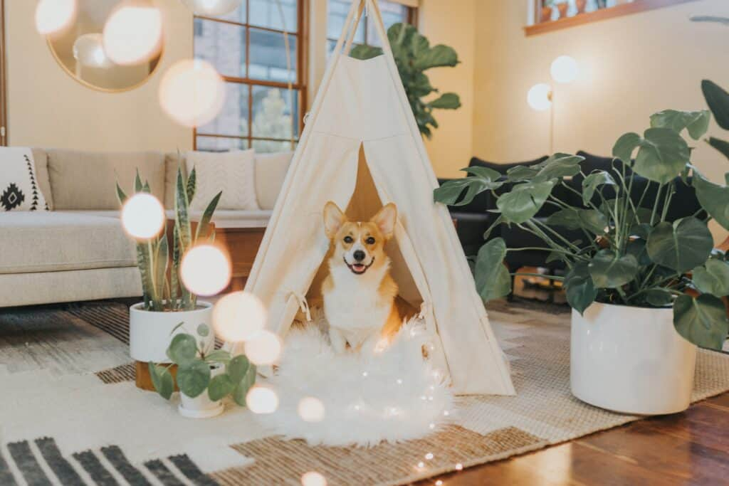 House plants to clean the inside air and protect your fur babies