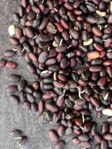 Sprouted Black Beans side