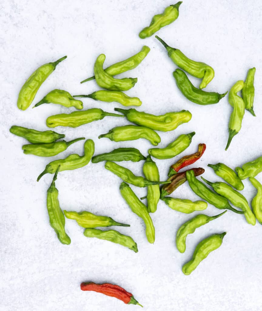 Shishito peppers green and red