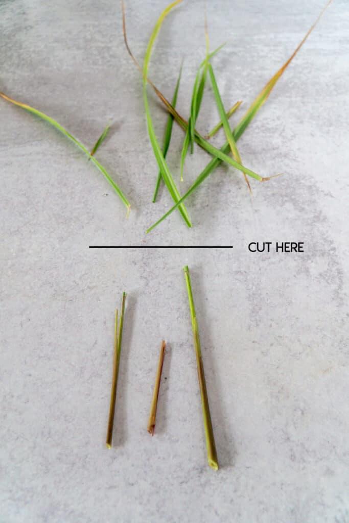 Where to cut lemongrass